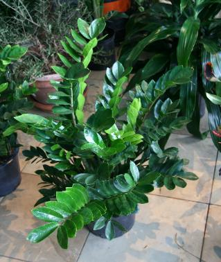 Fair oaks boulevard nursery houseplants - Best indoor plants for low light ...